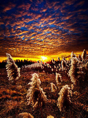 Fall Leaves Photograph - Heaven And Earth by Phil Koch