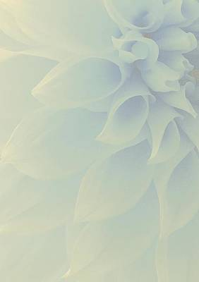 Dahlia Photograph - Heavenly by  The Art Of Marilyn Ridoutt-Greene