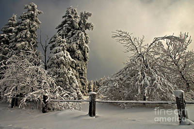 Winter Landscapes Photograph - Heavy Laden by Lois Bryan
