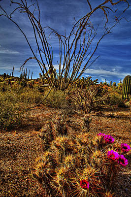 Sonoran Desert Photograph - Hedgehog And Ocotillo by Roger Passman