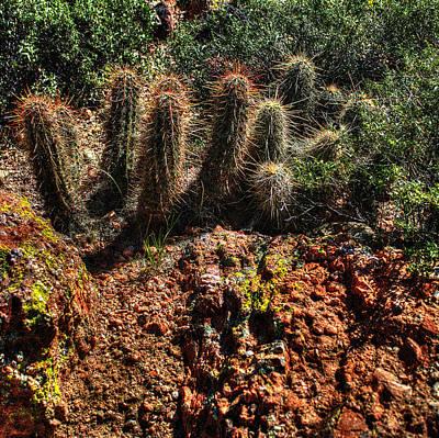 Desert Photograph - Hedgehog Cactus In Red Rocks by Roger Passman