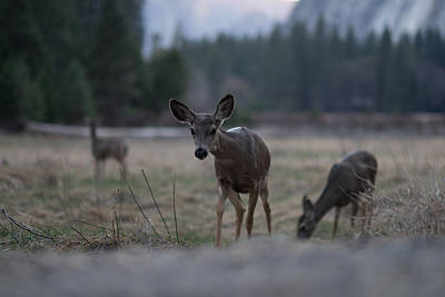 Deer Photograph - Hello There by Cameron Howard