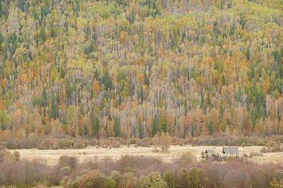 Hemp Creek Autumn Print by Dave Belcher
