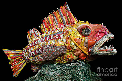 Found Art Photograph - Henry The Fish by Bob Christopher