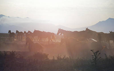 Gold Horse Photograph - Herd #34 by Artur Baboev