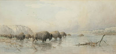 Yak Painting - Herd Of Buffalo Watering by Frederick