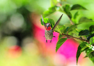 Hibiscus Photograph - Here's Looking At You by Lynn Bauer