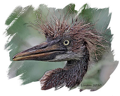 Heron Nestling Print by Larry Linton