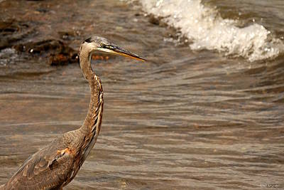 Photograph - Heron Supper by Greg Simmons