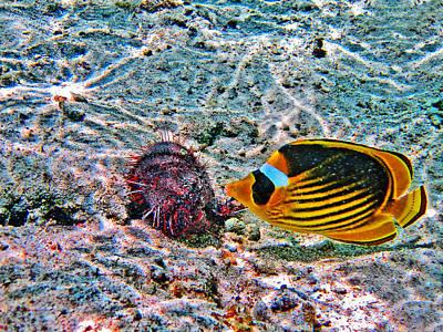 Hey. Underwater World. Original by Andy Za