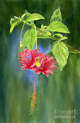 Hibiscus Chinese Red Lantern With Background Print by Sharon Freeman