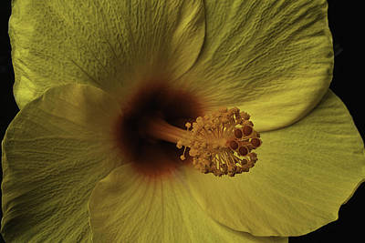 Pistil Photograph - Hibiscus Close Up by Garry Gay