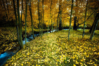 Yellow Stream Print featuring the photograph Hidden Glen by Dan Holmes