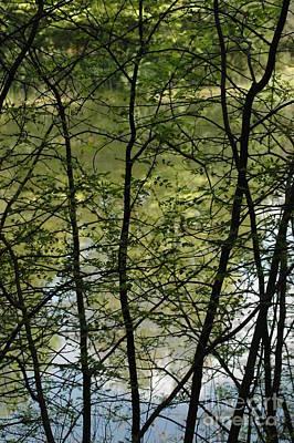 Sun Photograph - Hidden Pond Natural Fence by LeeAnn McLaneGoetz McLaneGoetzStudioLLCcom