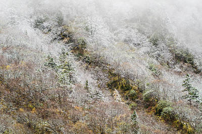High Mountain Forest, Covered By Snowy Hoar Frost, Huanglong Print by Sergey Orlov
