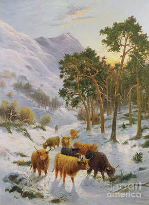 Highland Cattle In A Winter Landscape Print by Charles Watson