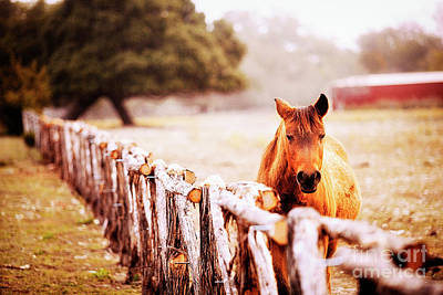 Kerr County Photograph - Hill Country Horse by Katya Horner