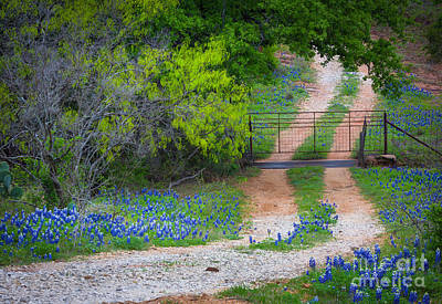 Solitude Photograph - Hill Country Road by Inge Johnsson