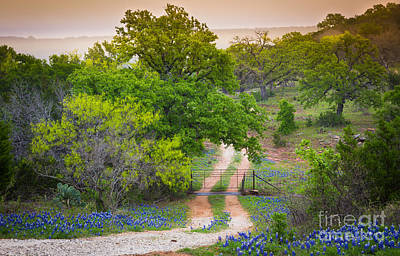 Hill Country Twilight Print by Inge Johnsson
