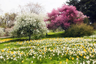 Daffodils Digital Art - Hills Of Daffodils by Jessica Jenney