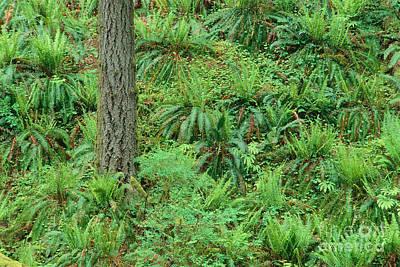Hillside Ferns Print by Greg Vaughn - Printscapes