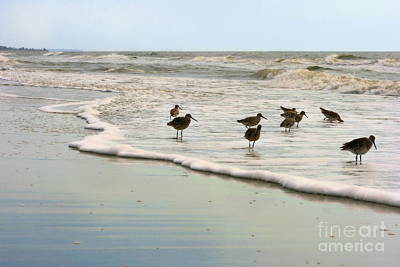 Beach Theme Decorating Photograph - Plundering Plover Series 6 by Angela Rath