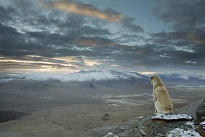 Companion Photograph - Himalayan Dog by Sebastian Wahlhuetter