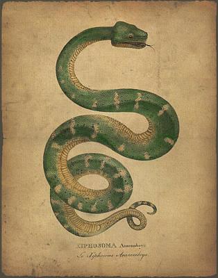 Boa Constrictor Drawing - Hiphosoma Araramboya by Sergey Lukashin