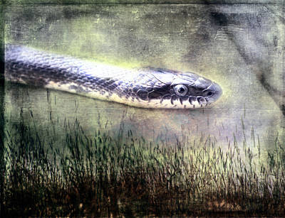 Reptiles Mixed Media - Hith Hith A Snake by Bellesouth Studio
