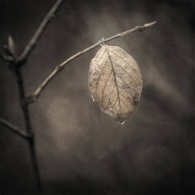 November Photograph - Holding On by Scott Norris