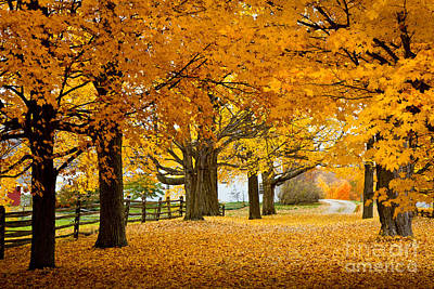 New Hampshire Autumn Photograph - Hollis Farm by Susan Cole Kelly