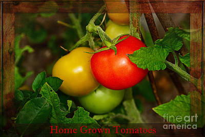 Tomatoes Photograph - Home Grown Tomatoes By Kaye Menner by Kaye Menner