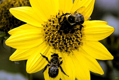 Honey Bees Print by David Lee Thompson