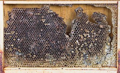 Honeycomb Print by Tom Gowanlock