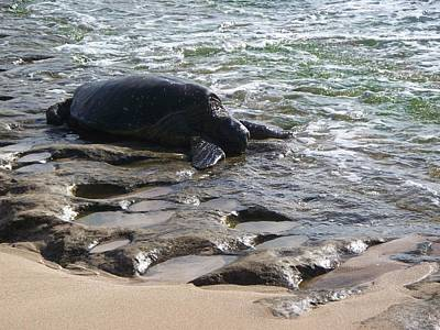 Laniakea Beach Photograph - Honu In Lanikea Surf by Grant Wiscour