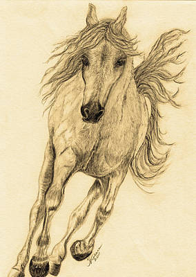 Sioux Drawing - Hoof Beats Sepia by Teresa Vecere