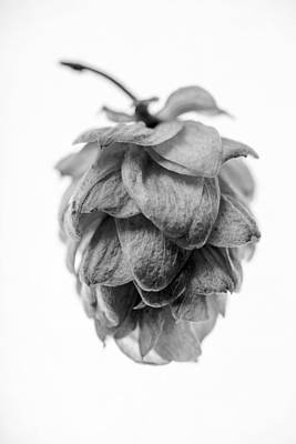 Beer Photograph - Hop 4 by Matthew Graves