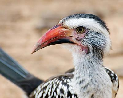 Hornbill Mixed Media - Hornbill by Yvette Holzbach