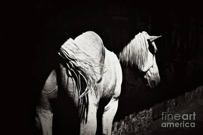 Horse At Rest Print by Marcia L Jones