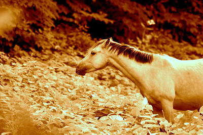 Candid Mixed Media - Horse Color Tone by Frances Lewis