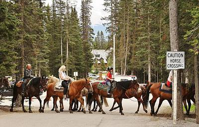 Photograph - Horse Crossing by Al Fritz