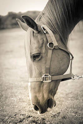 Animals Photograph - Horse Eating In A Pasture by Kelly Hazel