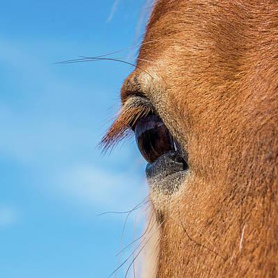 Horse Eye Print by Paul Freidlund