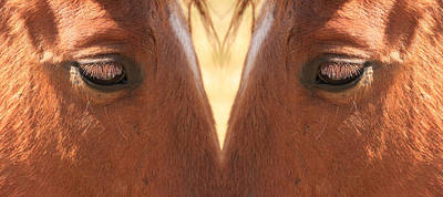 Horse Photograph - Horse Eyes Love by James BO  Insogna
