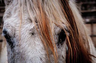 Horse Eyes Print by Okan YILMAZ