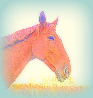This Horse Is Ready To Face Anything  Original by Hilde Widerberg