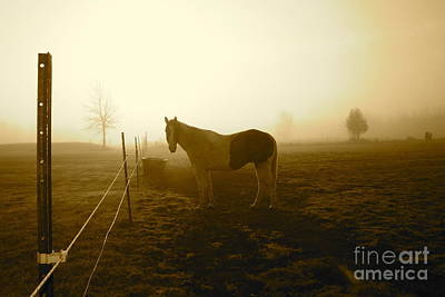 Horse Photograph - Horse In Autumn Photo By Valentina Miletic by Valentina Miletic