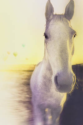 Horse In Motion Print by Jake Kerr