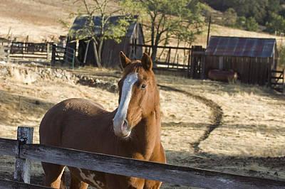 Cambria Photograph - Horse On Santa Rosa Creek Road by Rich Reid