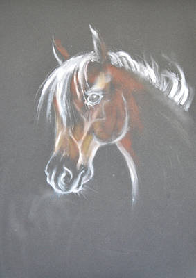 Horse Painting - Horse Portrait 1 -  By Diana Van by Diana Van